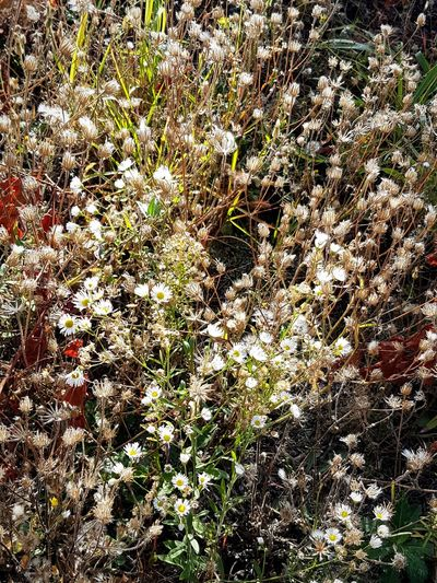 Full Frame Backgrounds Day Nature Outdoors No People Plant Beauty In Nature Close-up Flower Wild Flowers Wild Nature Uncultivated No People Freshness Flower Head Beauty In Nature Uncultivated Grass And Flowers Textures In Nature