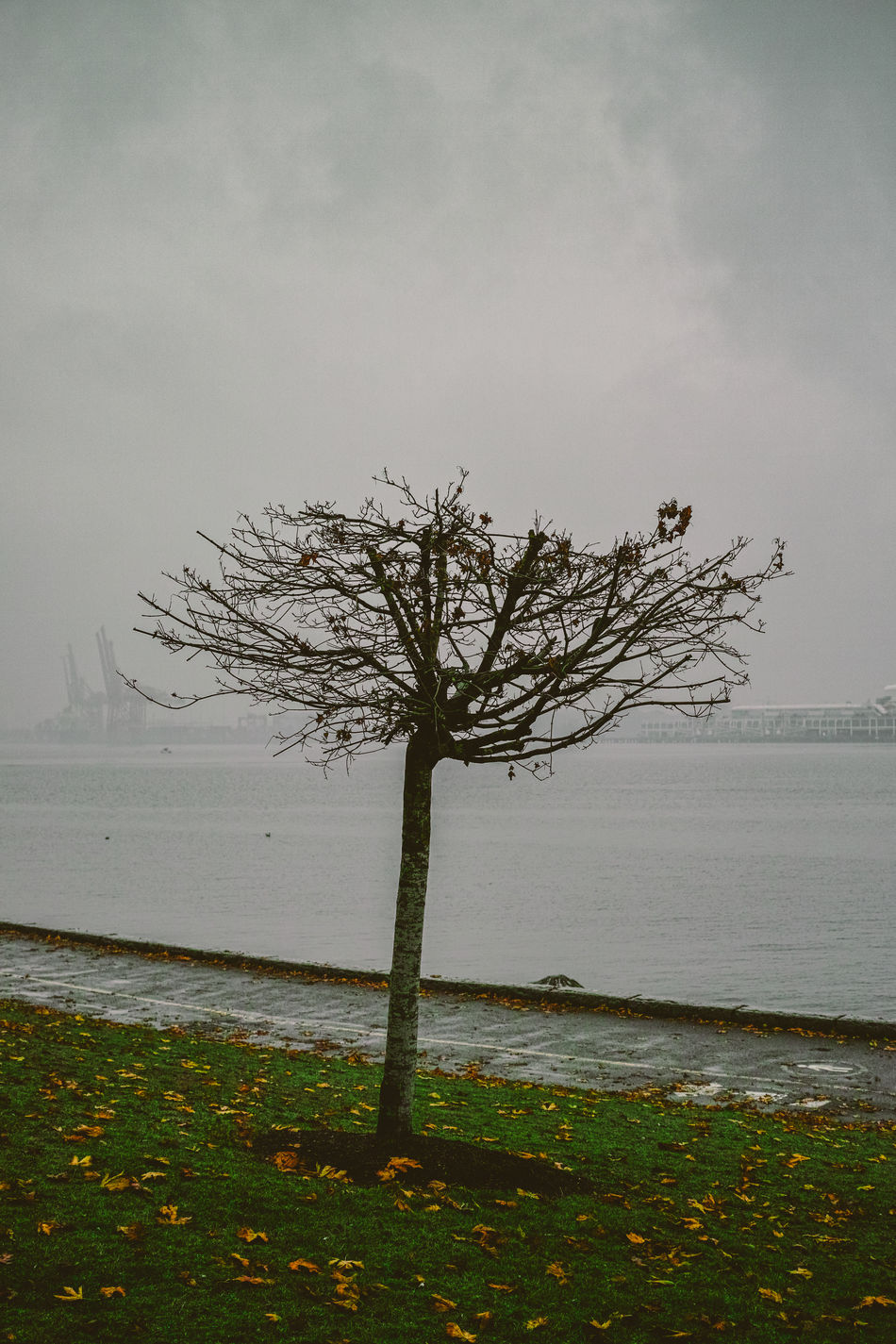 Stanley Park (Vancouver, Canada) Dp23 Leaves Nature Sigma Stanley Park Streetphotography Tree