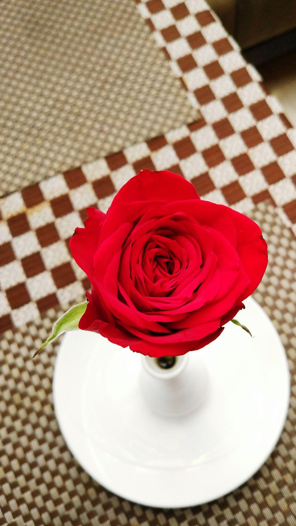 Rose flower Roseflower Dibin Photography White Background Red Love EyeEm Best Shots