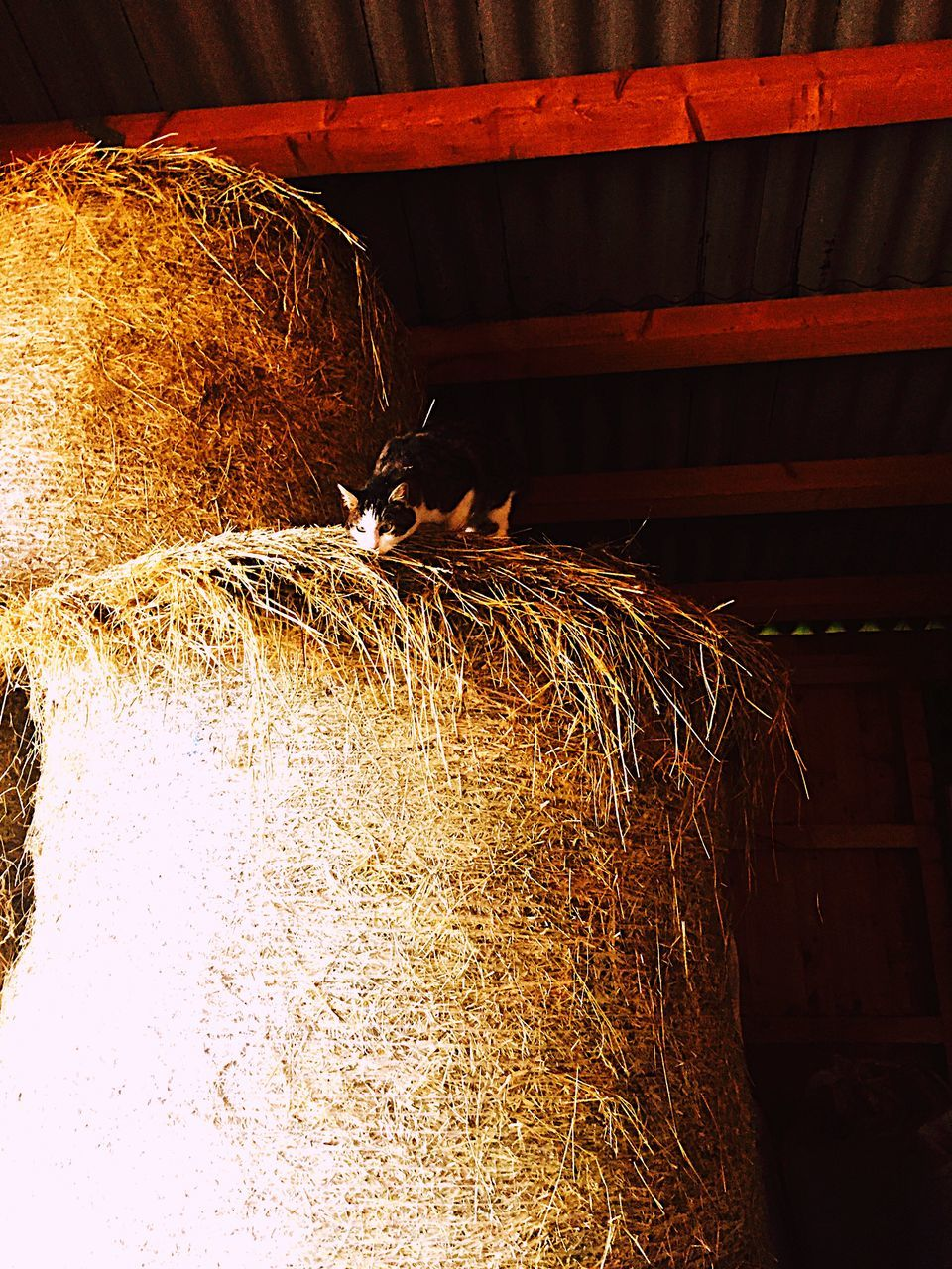 hay, straw, bale, haystack, no people, hay bale, stack, indoors, day, illuminated, close-up