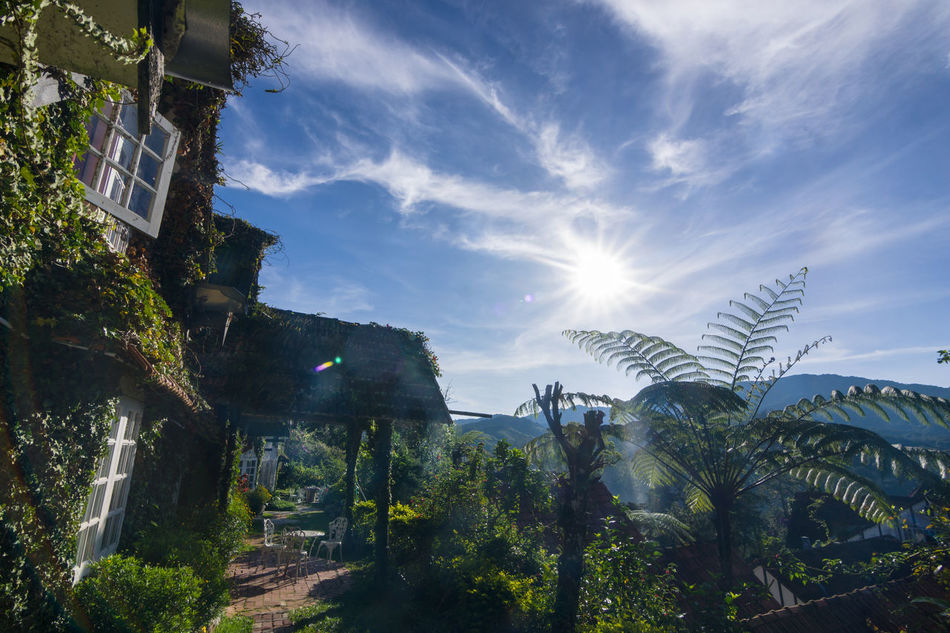 Good morning Morning Blue Sky Cloud Sun Cottage Cameron  Highlands Pahang Malaysia Travel Holiday Resort Plants Trees No People Light Rays Flare Cloud - Sky Tree Day Outdoors Sky Nature