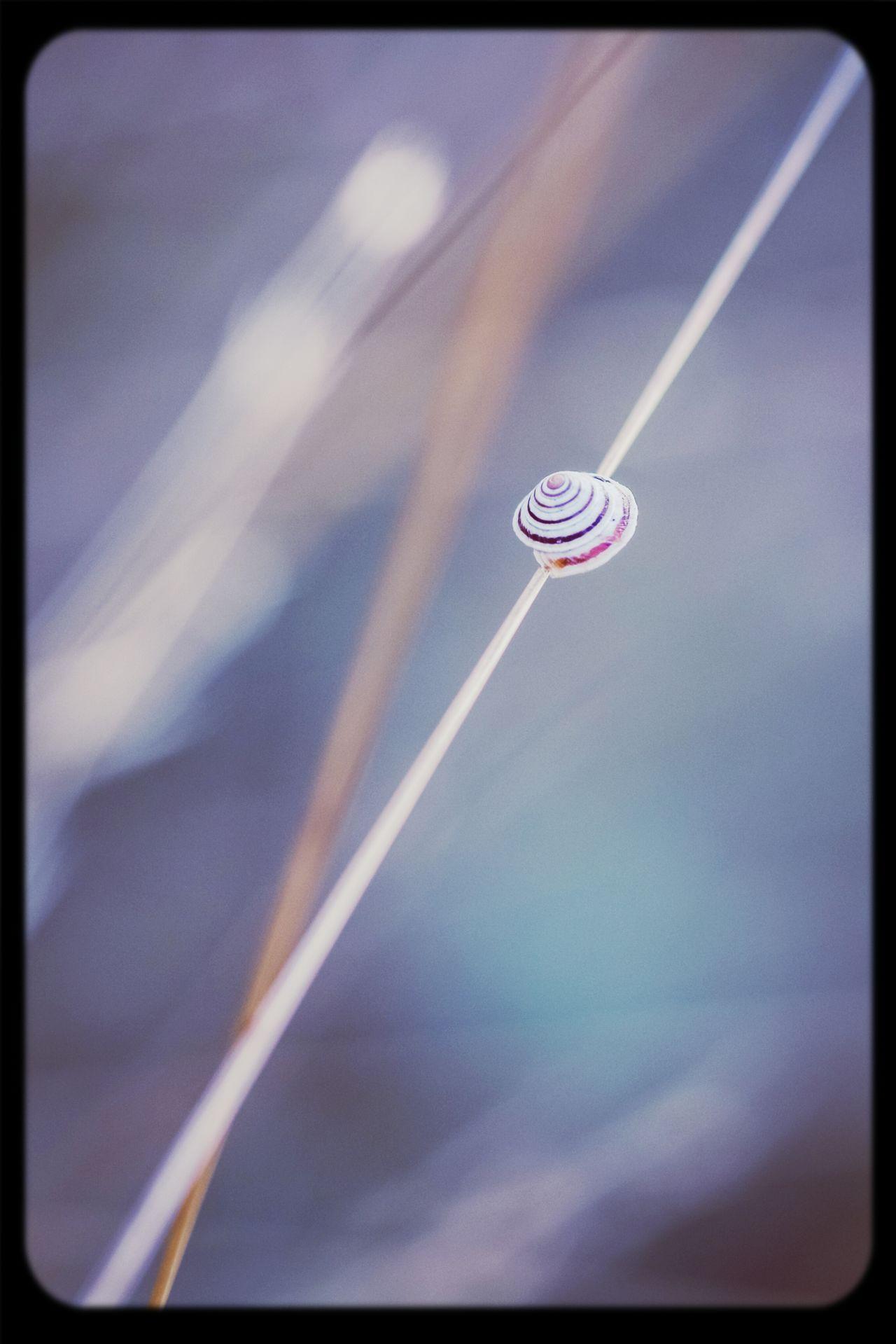 Macro snail escargot