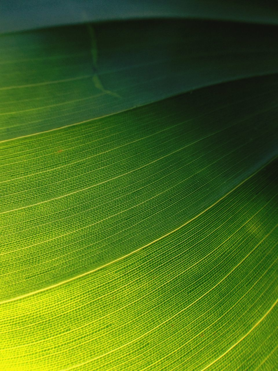 leaf, green color, backgrounds, nature, close-up, fragility, growth, full frame, no people, beauty in nature, freshness, day, outdoors
