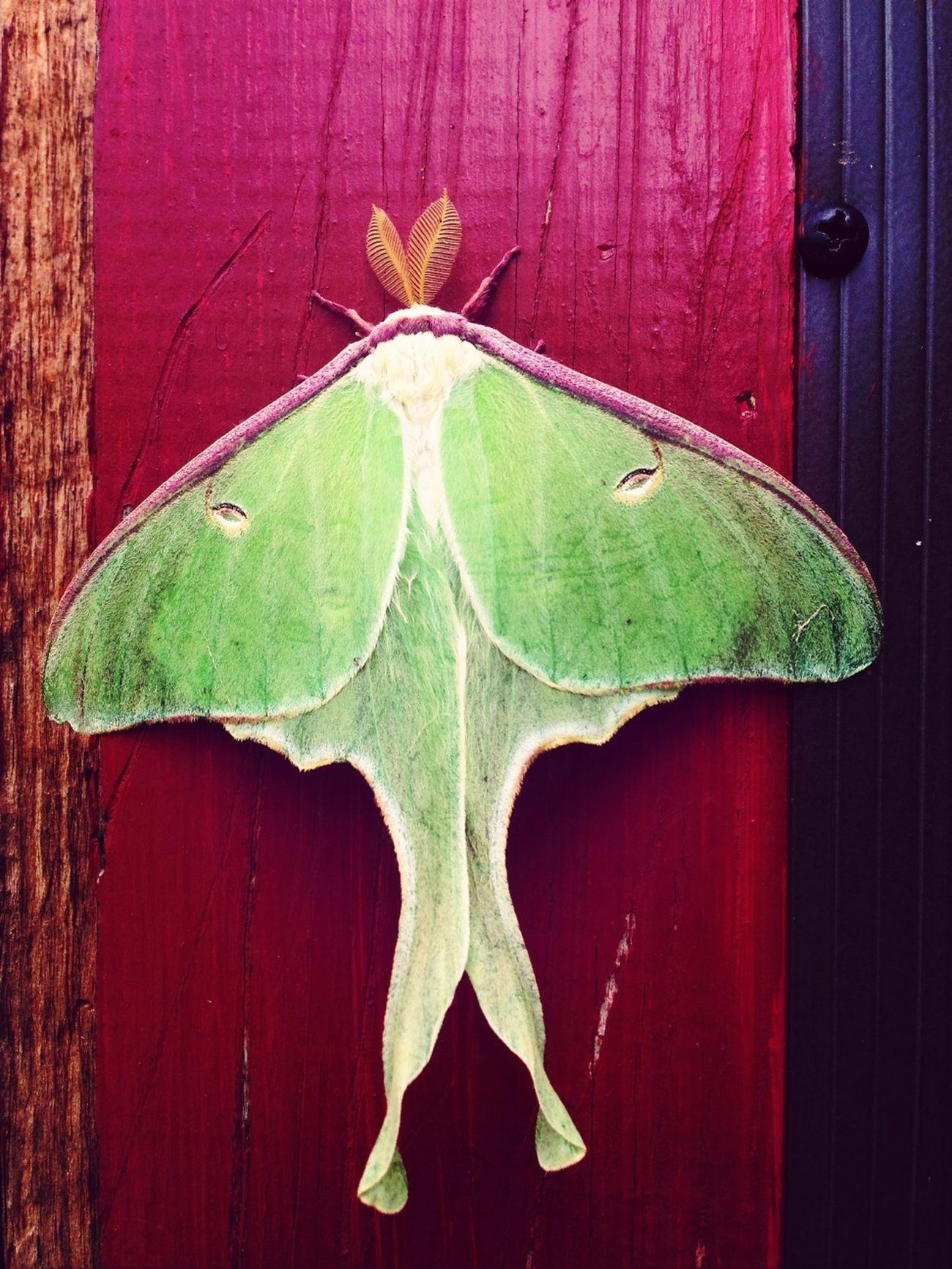 Portrait of a moth