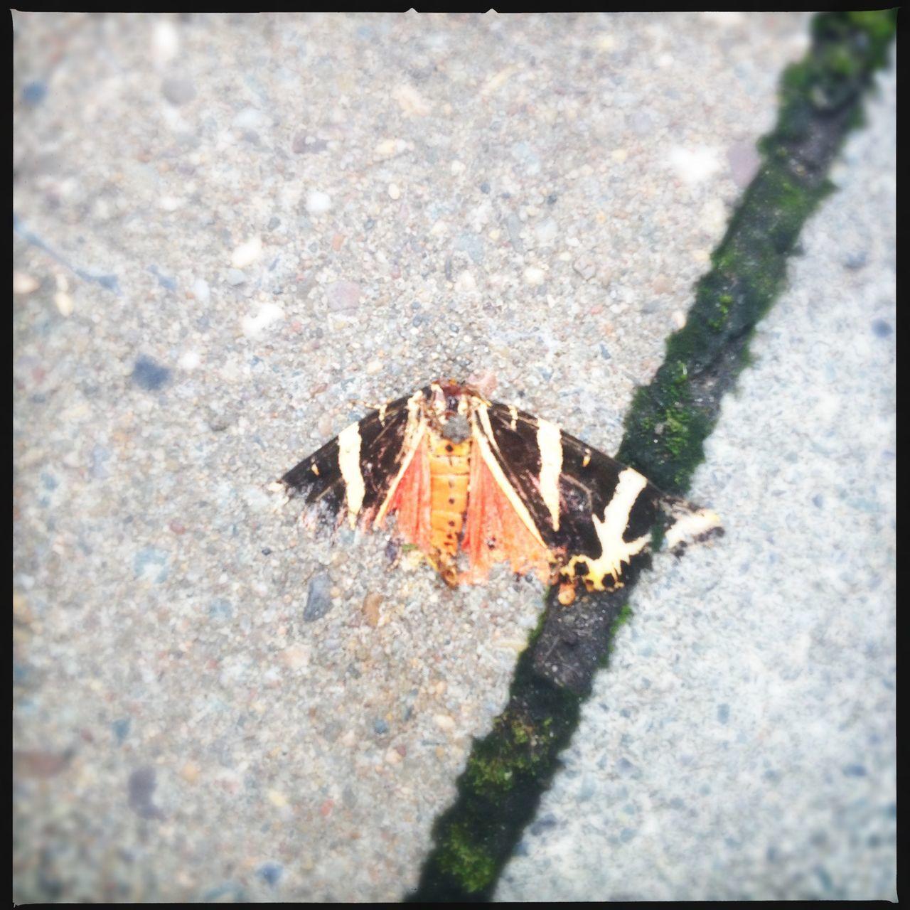 Dead Death Butterfly Butterflies