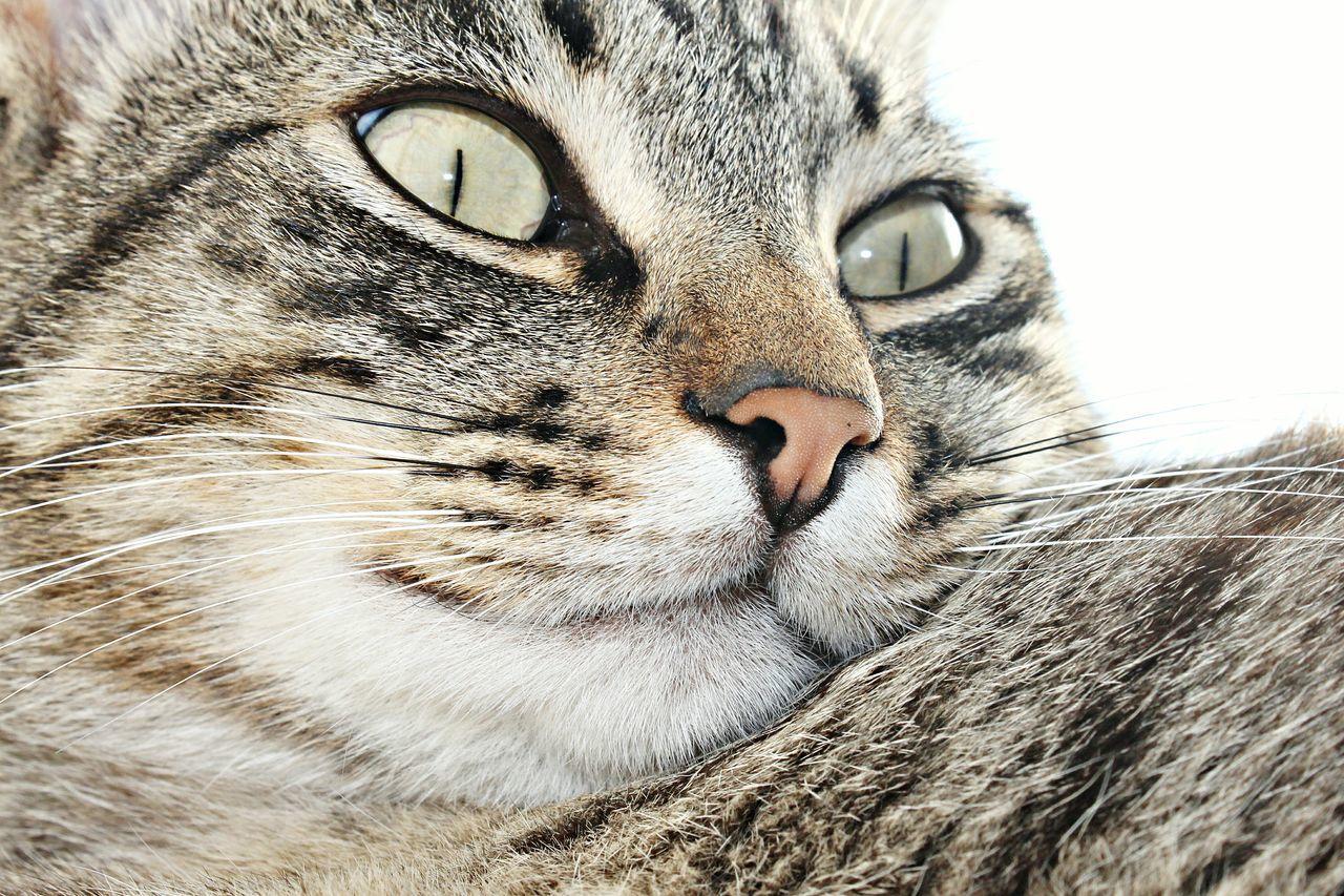 Nature Beautiful Cute Animals Animais Adorable Beautiful Animals  Animal Cute Cats Adorable Pets Adorable Cat  Pets Pet Cute Pets Kittens Gatos Gato Feline Feline Companions Feline Friend Felines Mutt Mutts Eyes Green Eyes