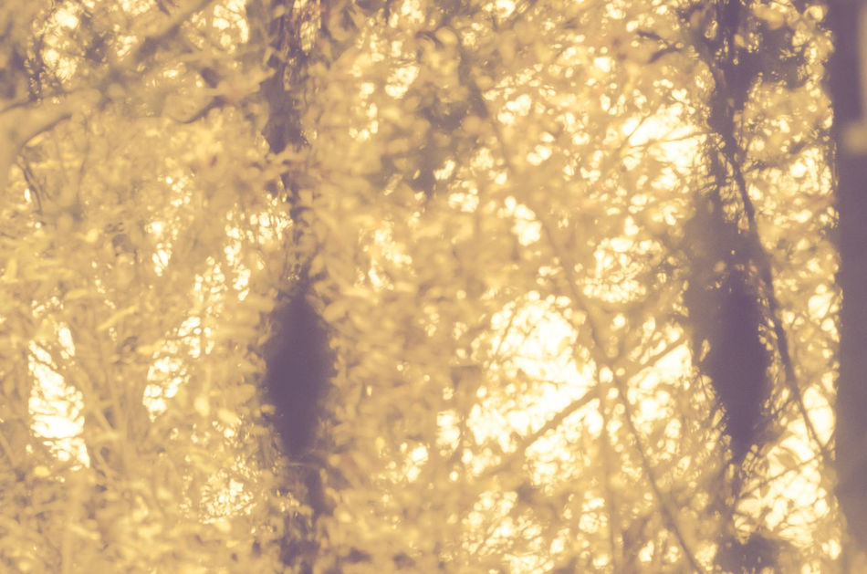 foliage - nature abstraction Abstract Abstractions In Color Backgrounds Christmas Close-up Day Foliage, Vegetation, Plants, Green, Leaves, Leafage, Undergrowth, Underbrush, Plant Life, Flora Gold Colored Nature Nature No People Outdoors Shiny