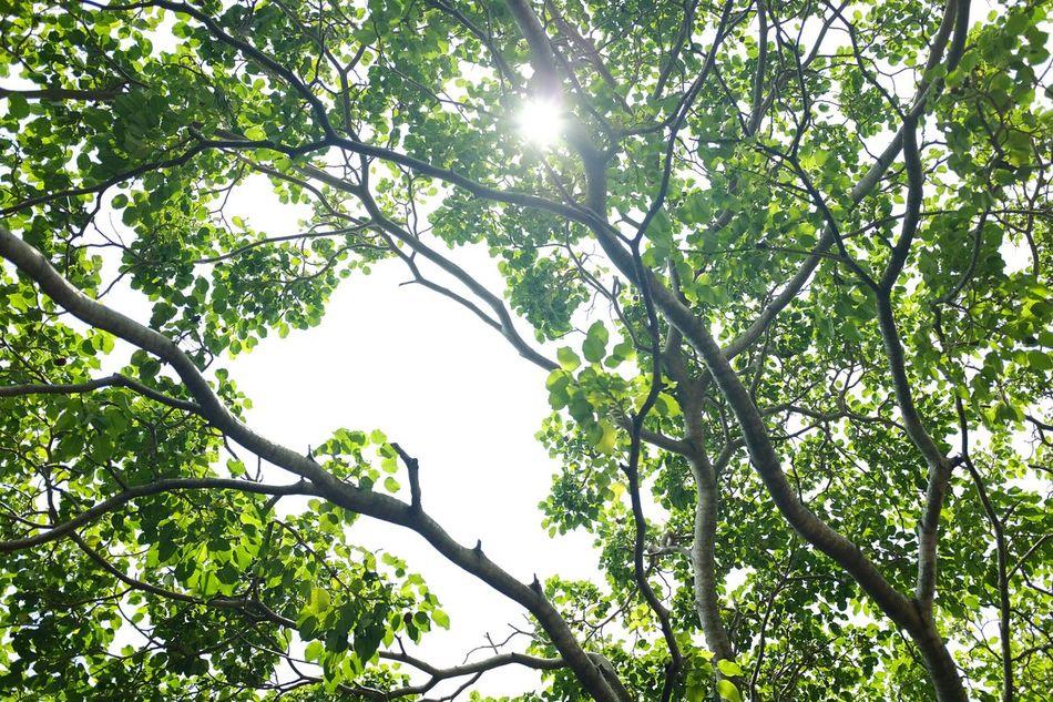 Trees Nature Malaysia EyeEm Malaysia Fujifilm Est Bosiang Green