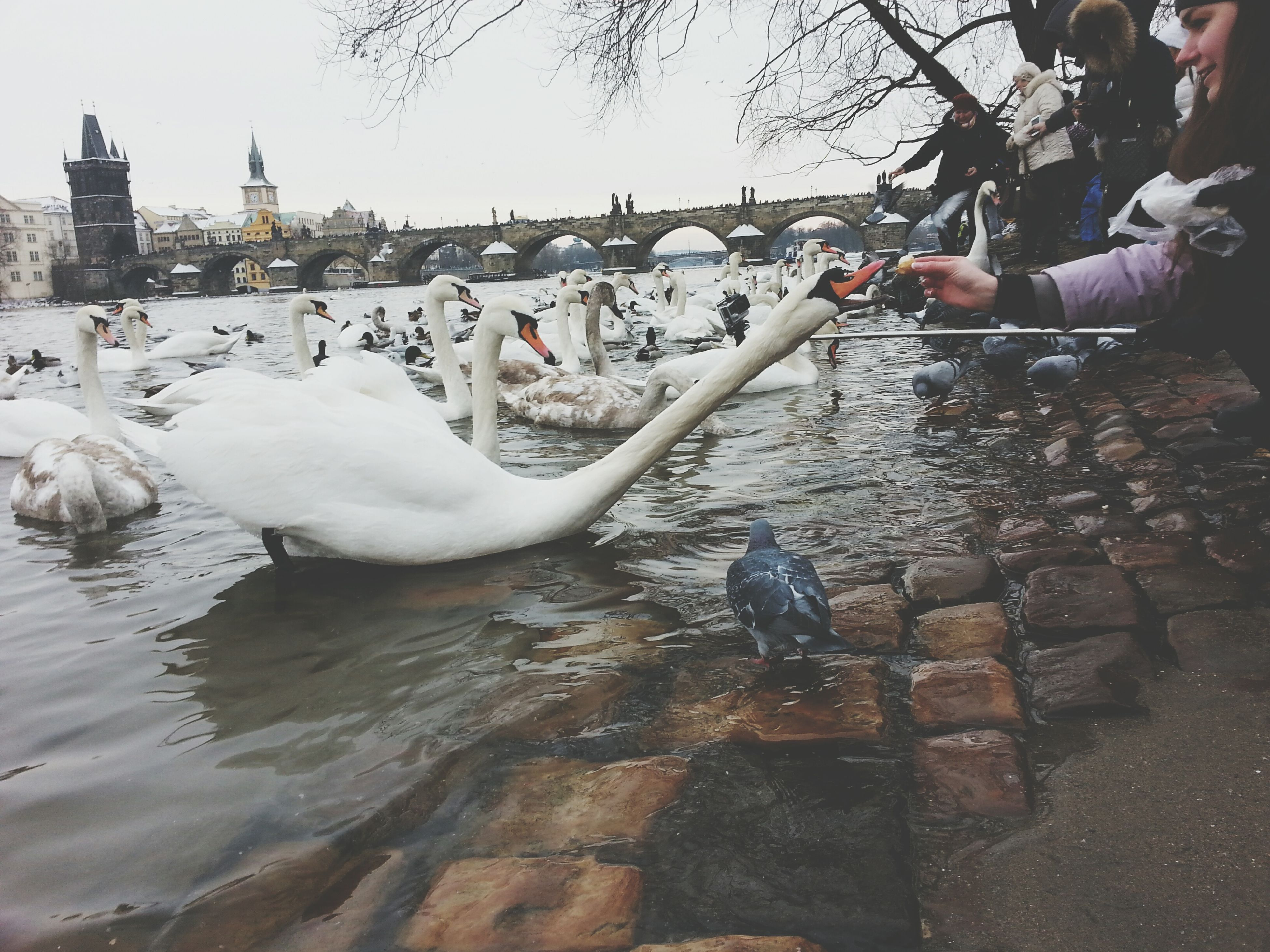 bird, water, animal themes, animals in the wild, architecture, built structure, river, wildlife, building exterior, lake, seagull, day, one animal, swan, lifestyles, outdoors, nature, leisure activity