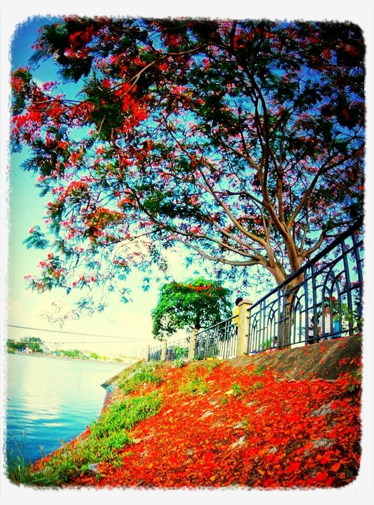Hai Phong today Hải Phòng