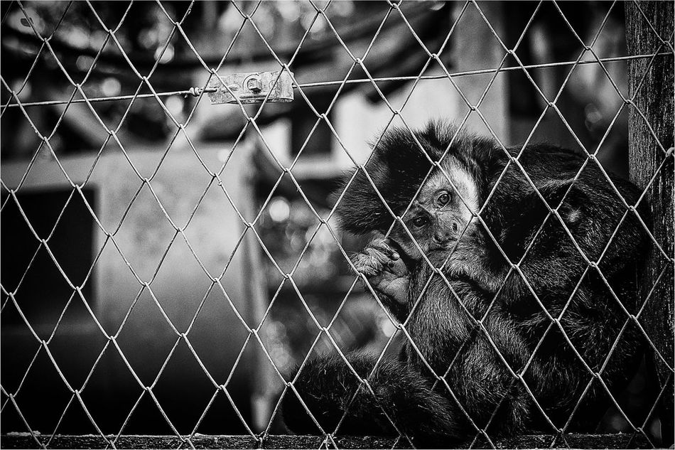 Blackandwithe Monochrome Emotions Bw_collection Blackandwhite Zoo