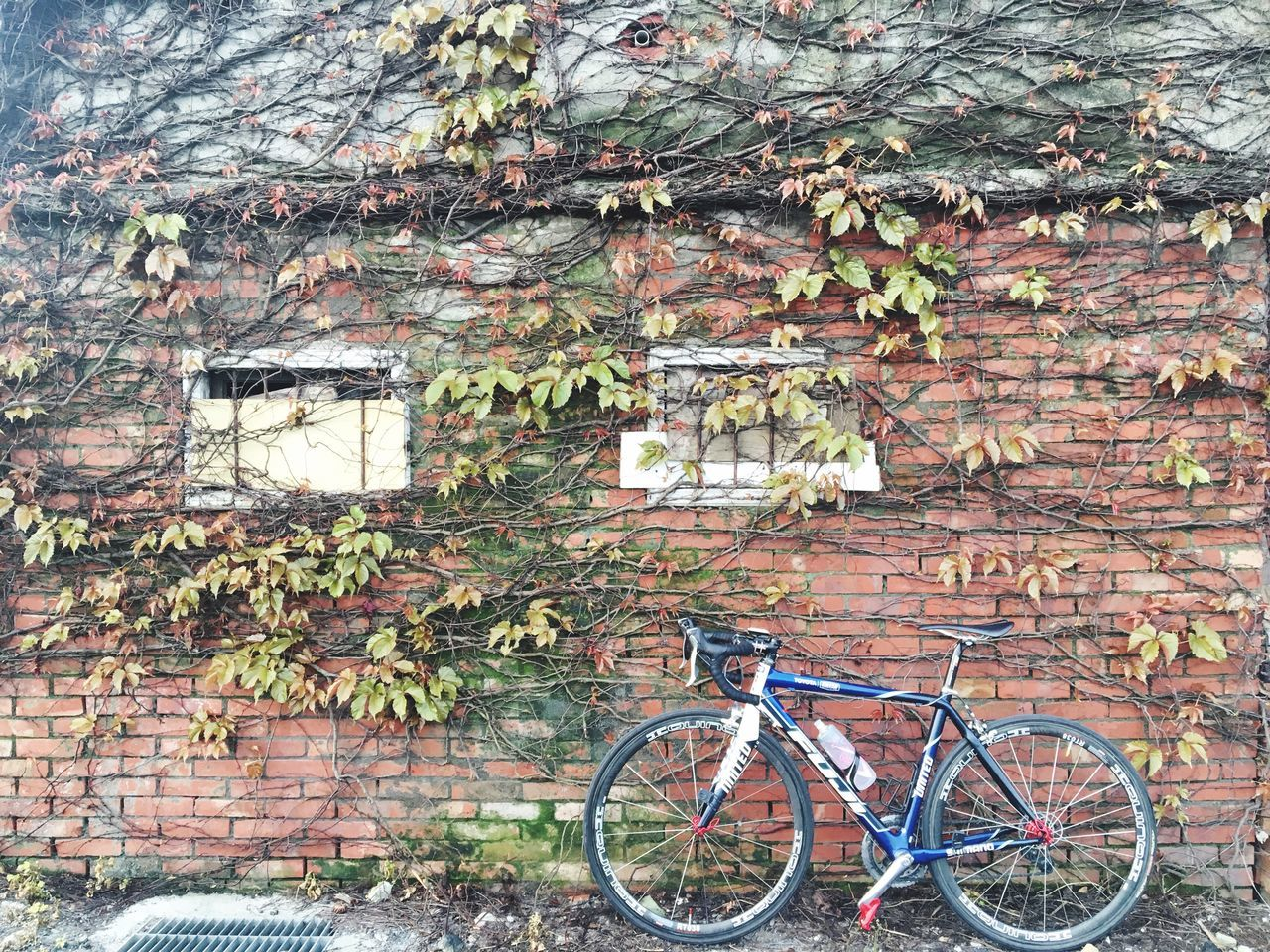 built structure, bicycle, building exterior, architecture, outdoors, day, brick wall, leaf, no people, tree, ivy, growth, plant, nature, branch