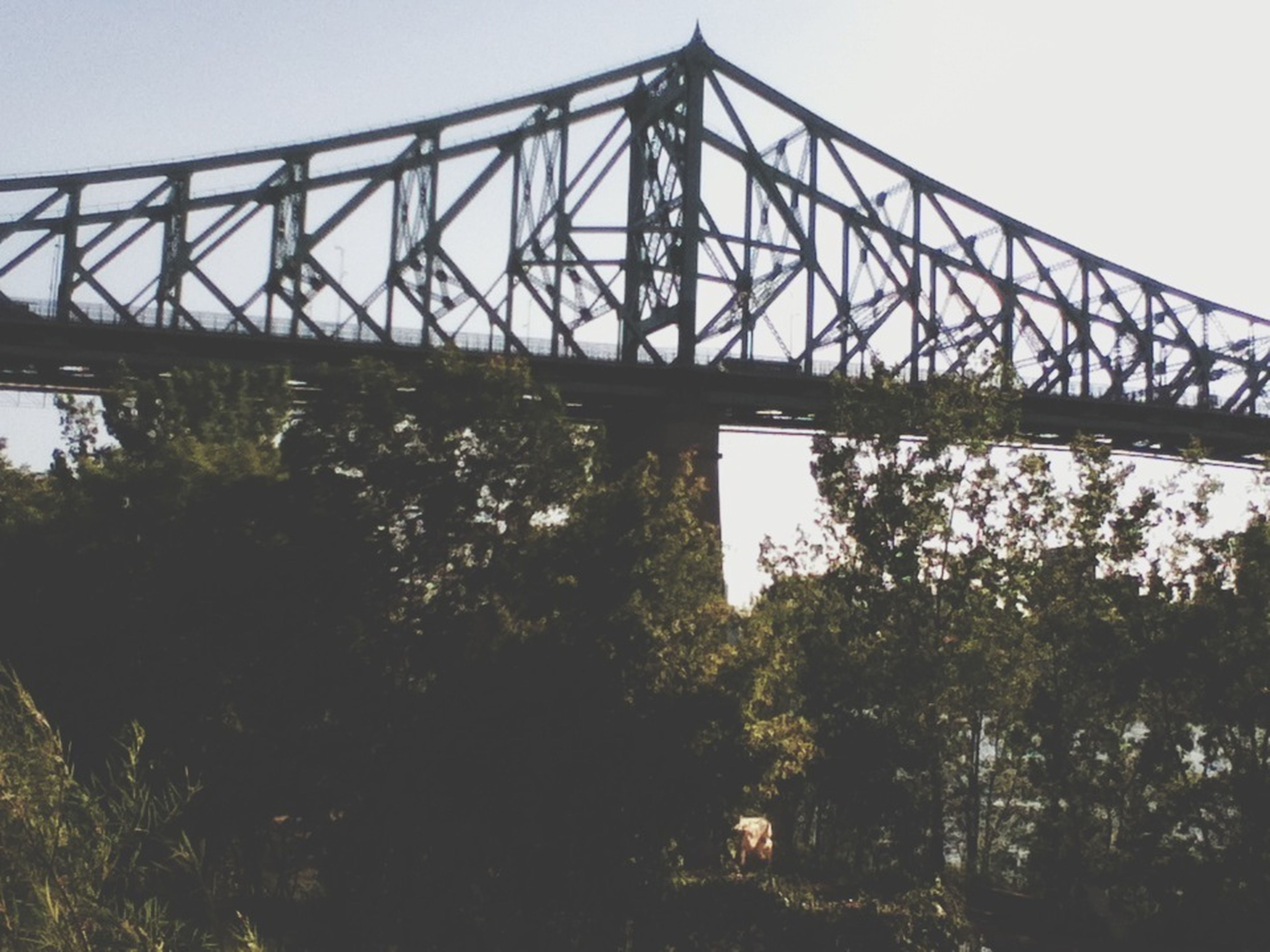connection, bridge - man made structure, built structure, low angle view, clear sky, tree, architecture, engineering, metal, sky, bridge, metallic, no people, outdoors, day, growth, nature, railing, footbridge, transportation
