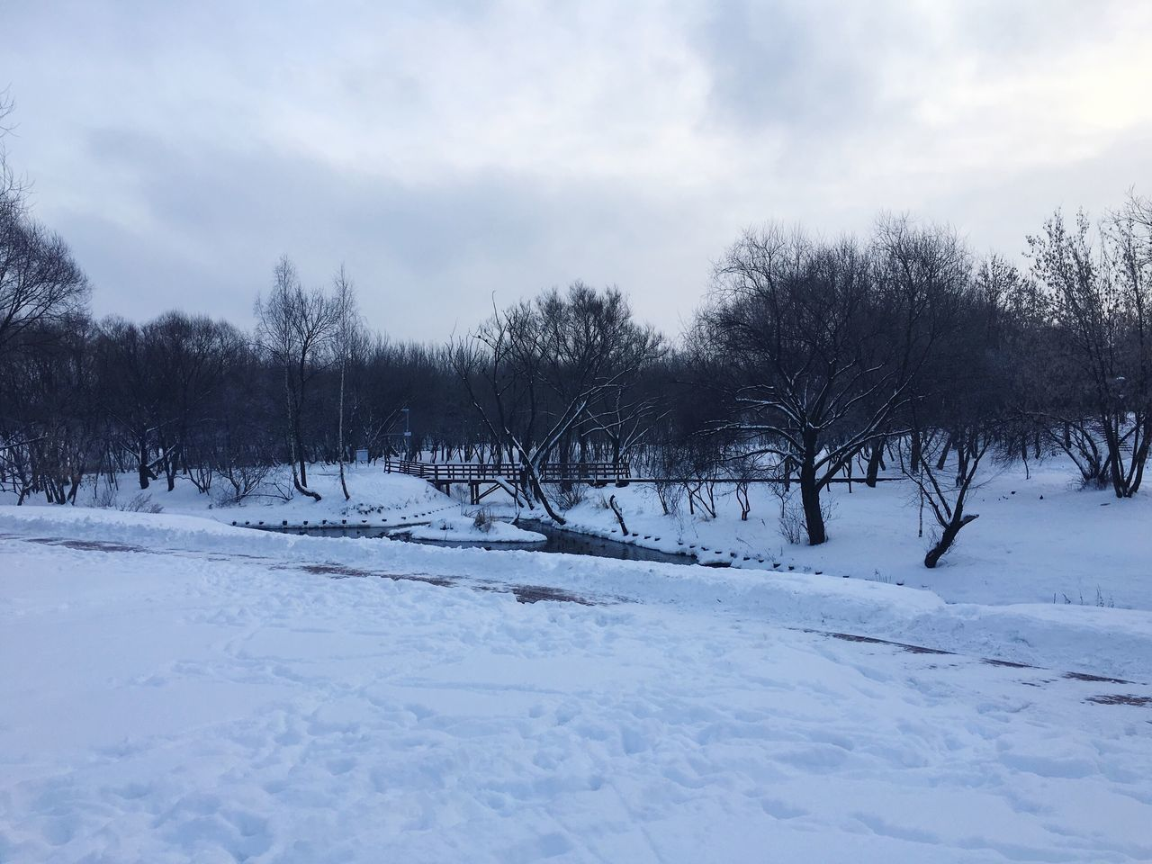 Cold Temperature Snow Winter Tree Sky Nature No People Weather Outdoors Bare Tree Tranquil Scene Cloud - Sky Tranquility Day Beauty In Nature Scenics Parks Yauza Moscow Russia 🇷🇺