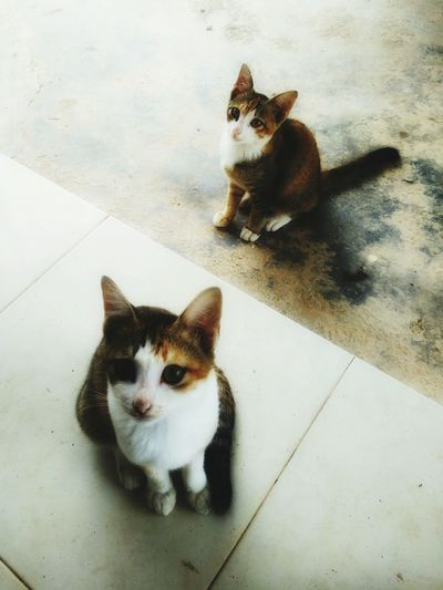 Double trouble .... Domestic Cat Pets Domestic Animals Looking At Camera Animal Themes Cat Tabby Cat Whisker Indoors  Day Mammal Catslover