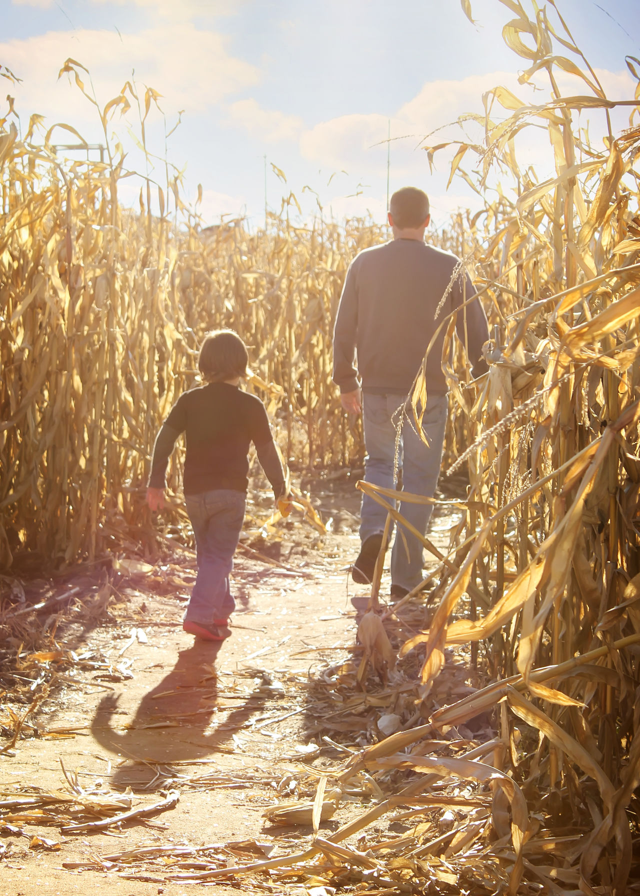 Beautiful stock photos of father, Agriculture, Boys, Childhood, Corn - Crop