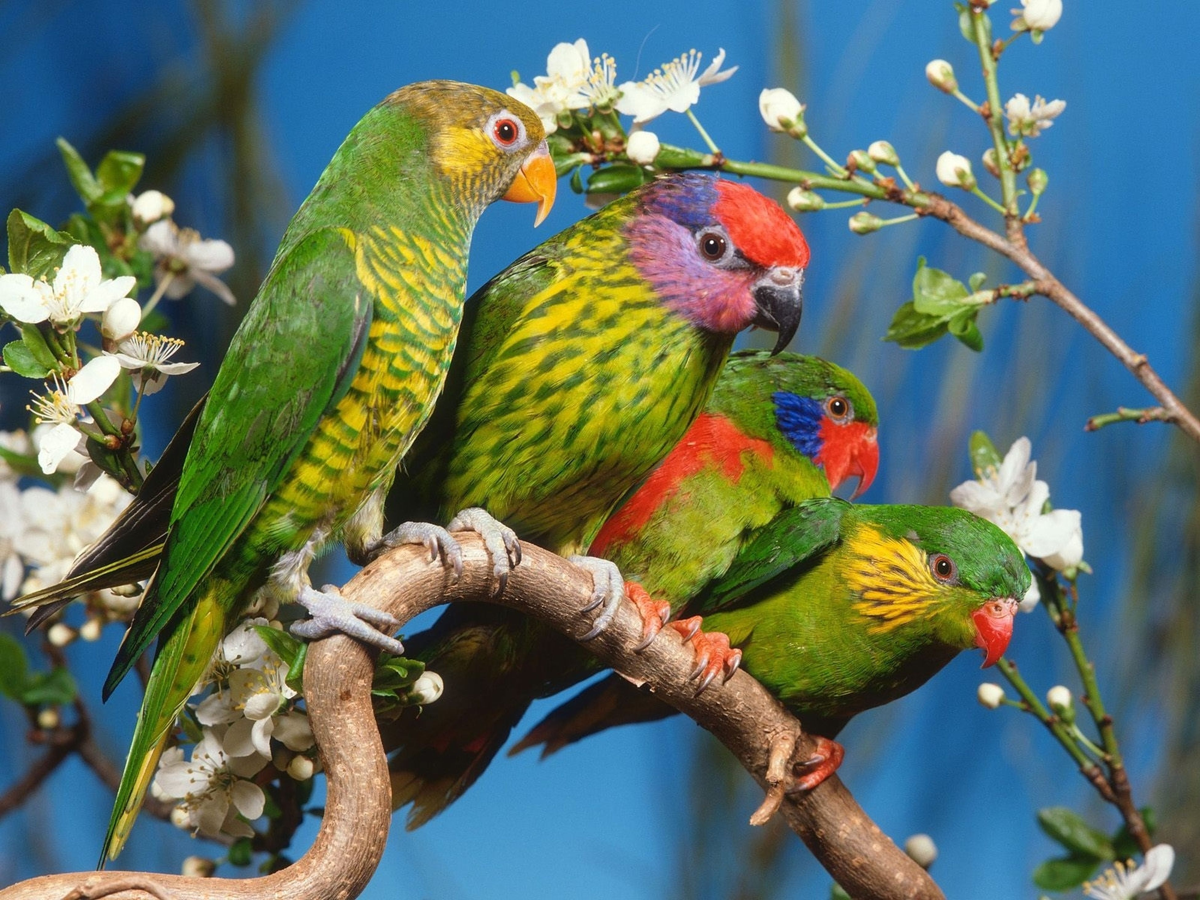 animal themes, bird, wildlife, branch, perching, low angle view, parrot, tree, close-up, nature, blue, multi colored, focus on foreground, day, outdoors, beauty in nature, no people, perched, avian, animal head, animal, growth, sky, green color, selective focus