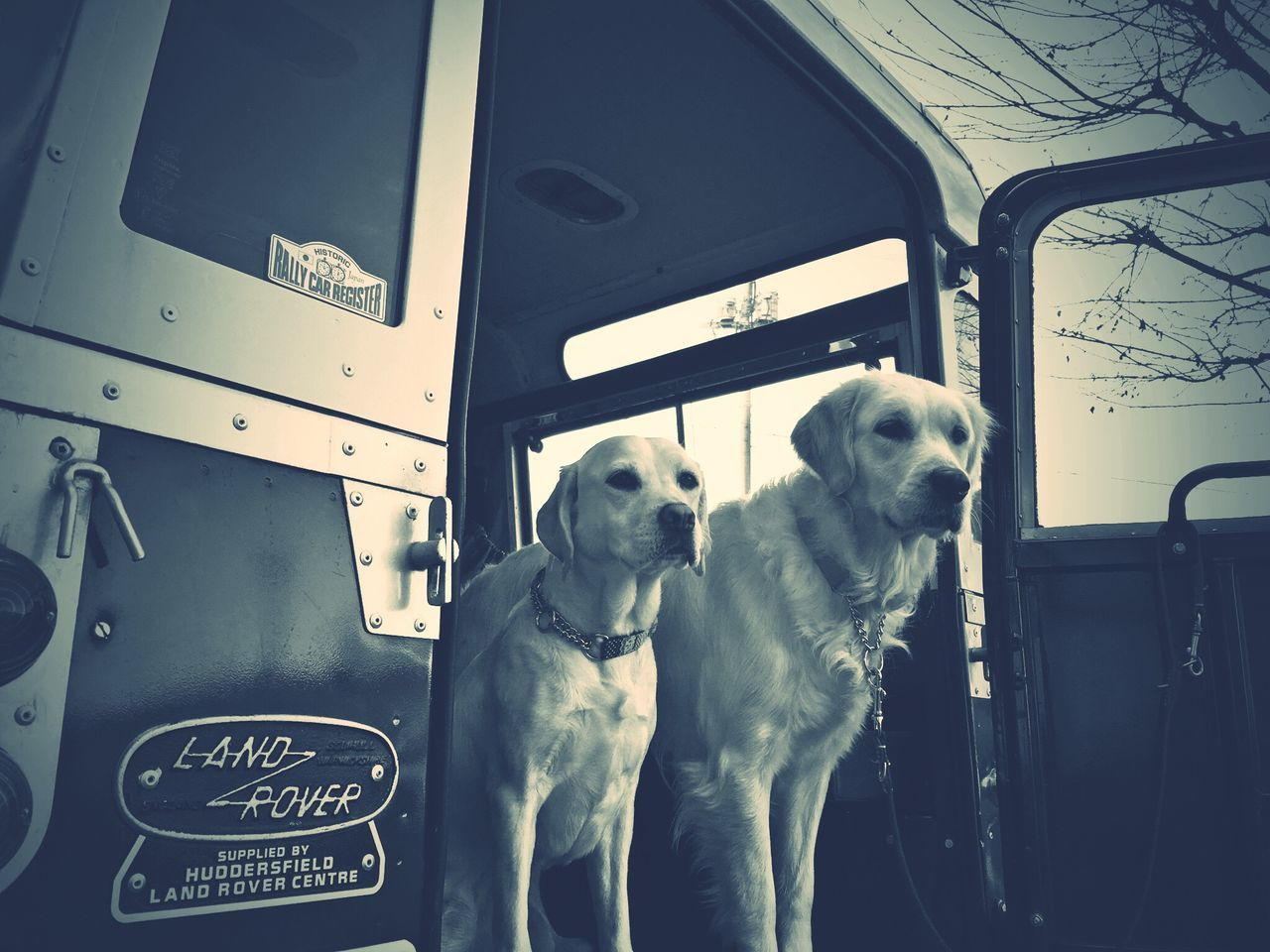 dog, transportation, train - vehicle, mode of transport, animal themes, pets, land vehicle, domestic animals, mammal, day, no people, vehicle seat, outdoors