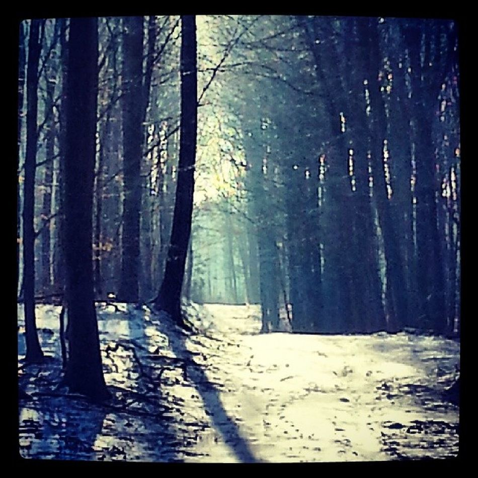 Forrest Nature Beautiful Trees Life Treesrock Woods Specialbranch Tagstagram Scenery Tagsta Leafs Love Tagsta_nature Ic_trees TreePorn Pictureoftheday Branches Instanature Tree Green Wood Ilovetrees Winter Art landscape cute snow look follow