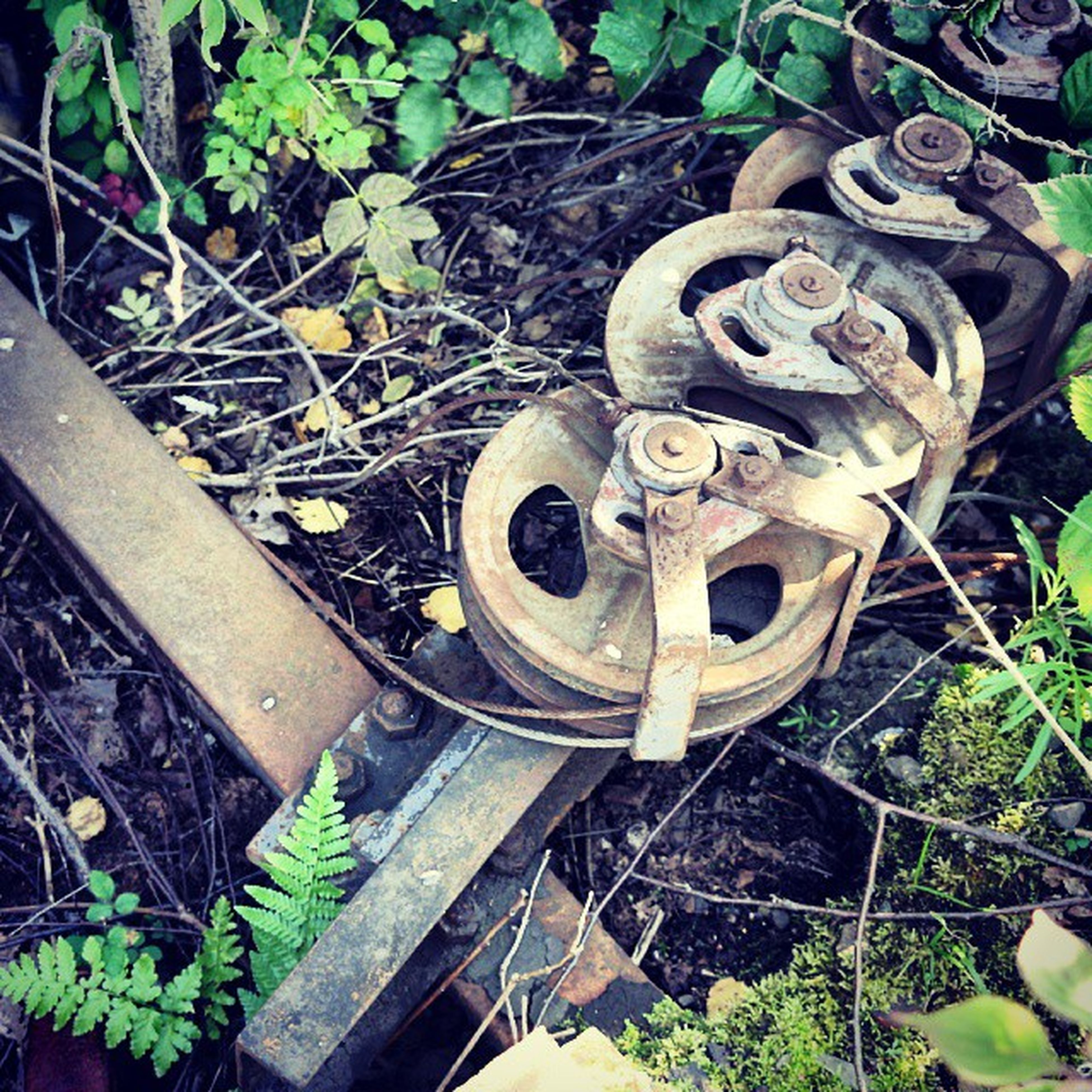 high angle view, plant, green color, leaf, abandoned, growth, obsolete, old, field, day, outdoors, damaged, no people, rusty, metal, grass, nature, railroad track, close-up, front or back yard