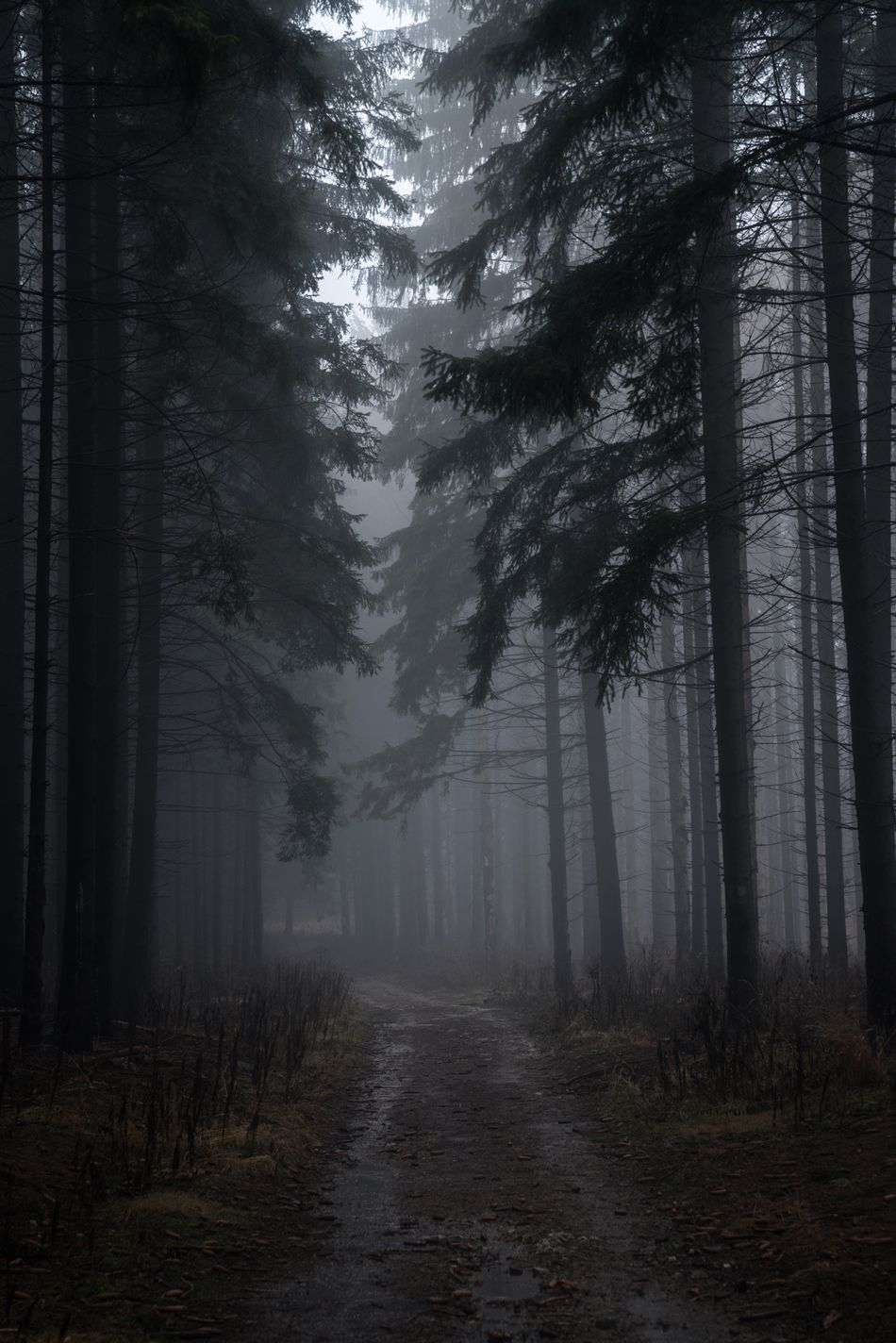 Uncertainty. Tree Forest Fog Nature Landscape Spooky Tree Trunk Scenics WoodLand Outdoors Footpath Beauty In Nature No People Tree Area Day Bükk Bükk Nationalpark Hungary Bükk National Park National Park Hungary Miskolc Nature Travel Travel Destinations Traveling