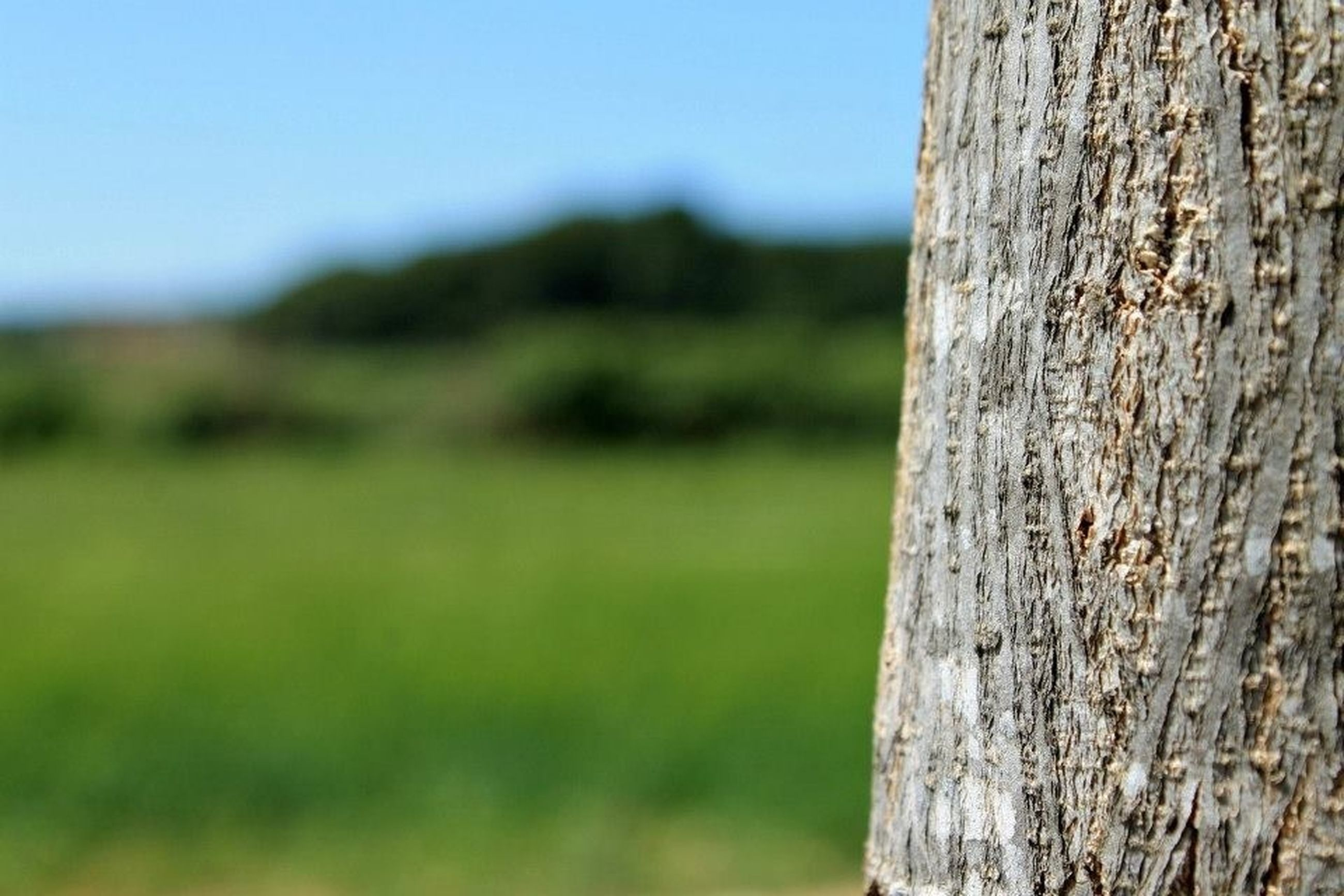 focus on foreground, close-up, textured, wood - material, tree trunk, selective focus, nature, tree, tranquility, landscape, field, day, sky, outdoors, growth, tranquil scene, no people, grass, wood, wooden post