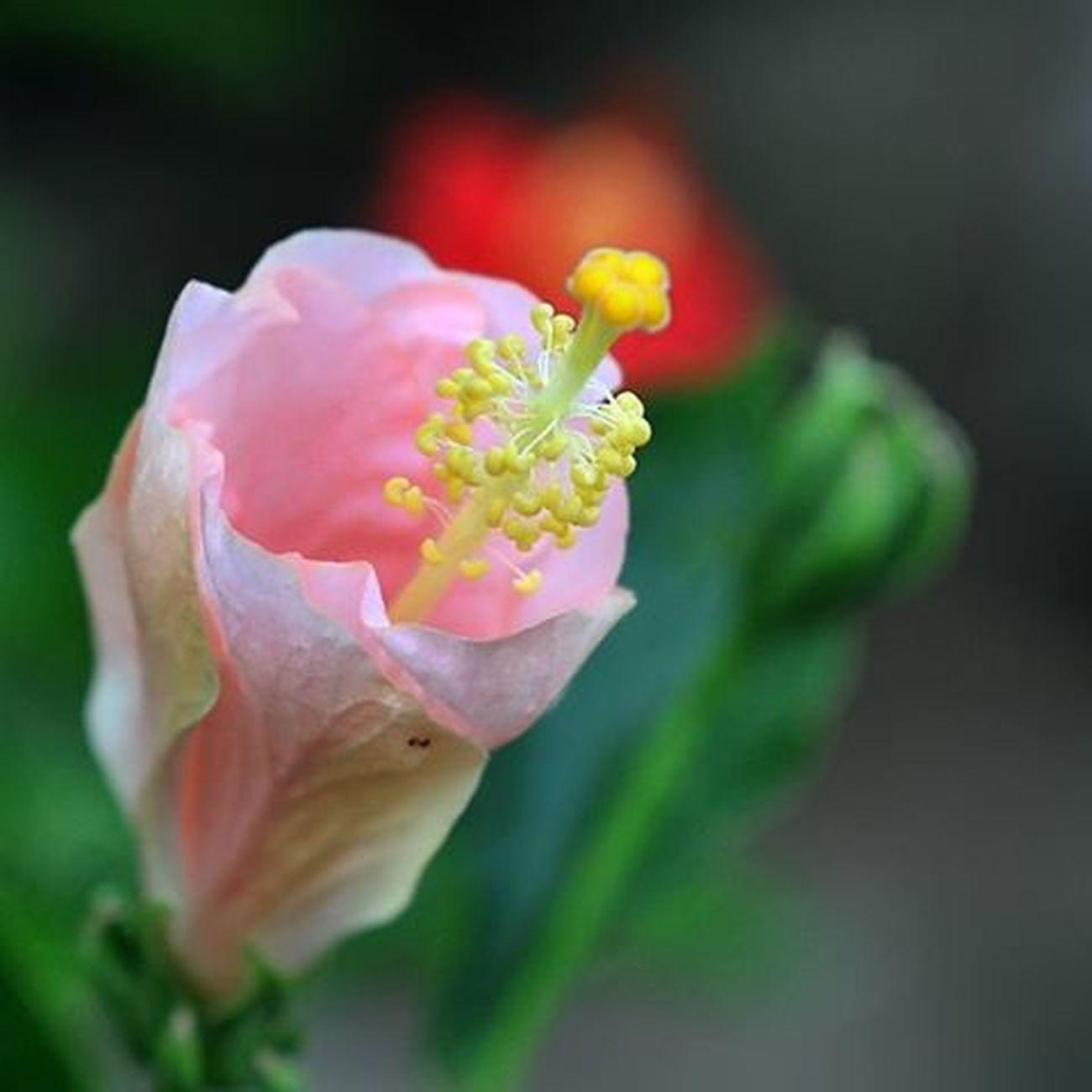 Beautiful lady. Flowersoftheday Flower Igflowers Tgif_flower ponyfony_flowers nice love