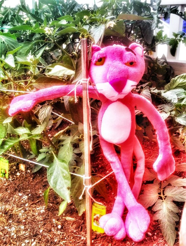 Are you in the pink Yet Special Effects Enjoying Life Life Is A Journey Pink Panther On The Road Pink Panther In A Garden Share A Photograph Enjoy The Little Things
