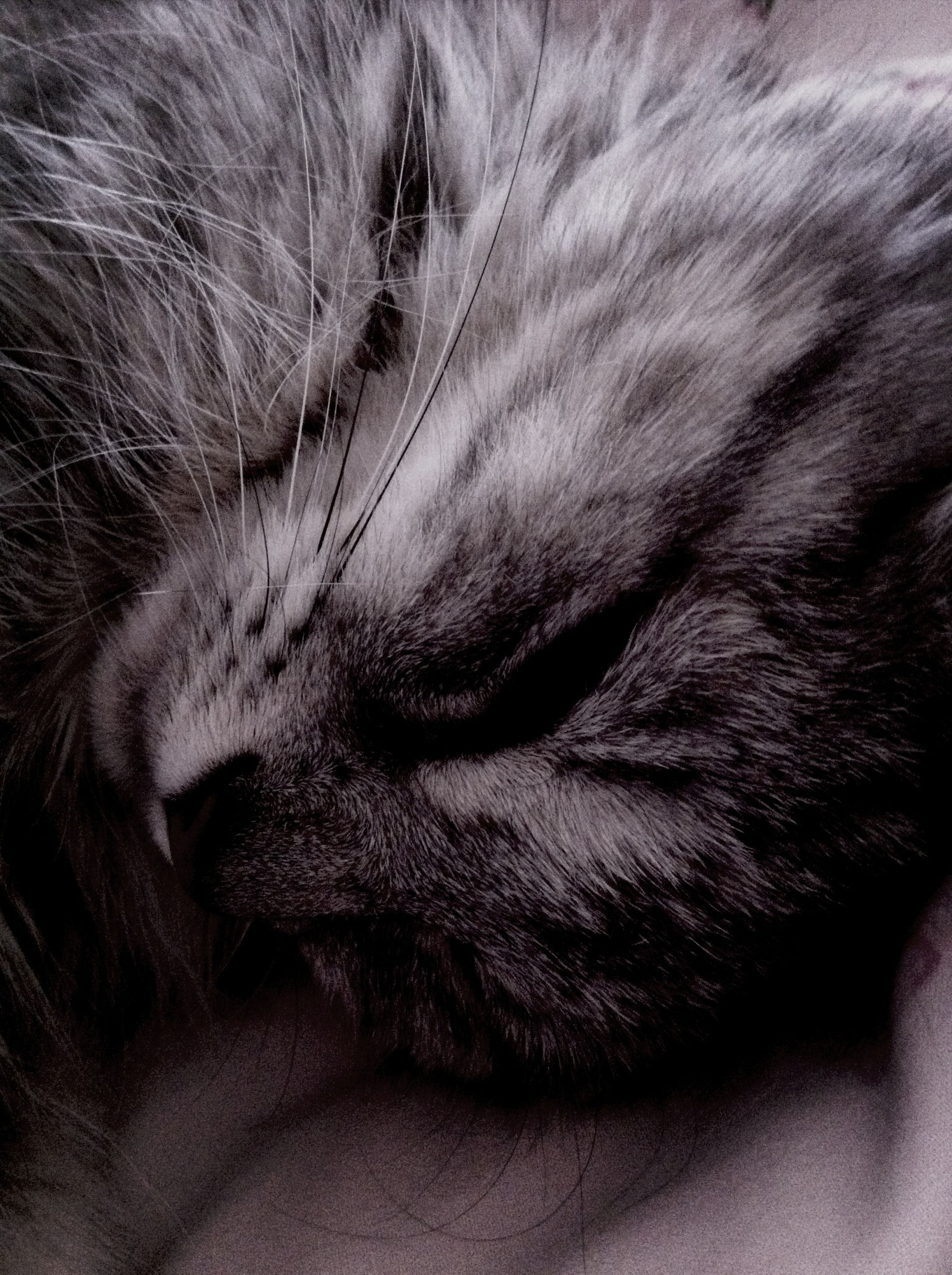 domestic animals, pets, one animal, animal themes, mammal, domestic cat, cat, indoors, feline, relaxation, sleeping, whisker, close-up, resting, animal head, animal body part, lying down, eyes closed, bed, part of