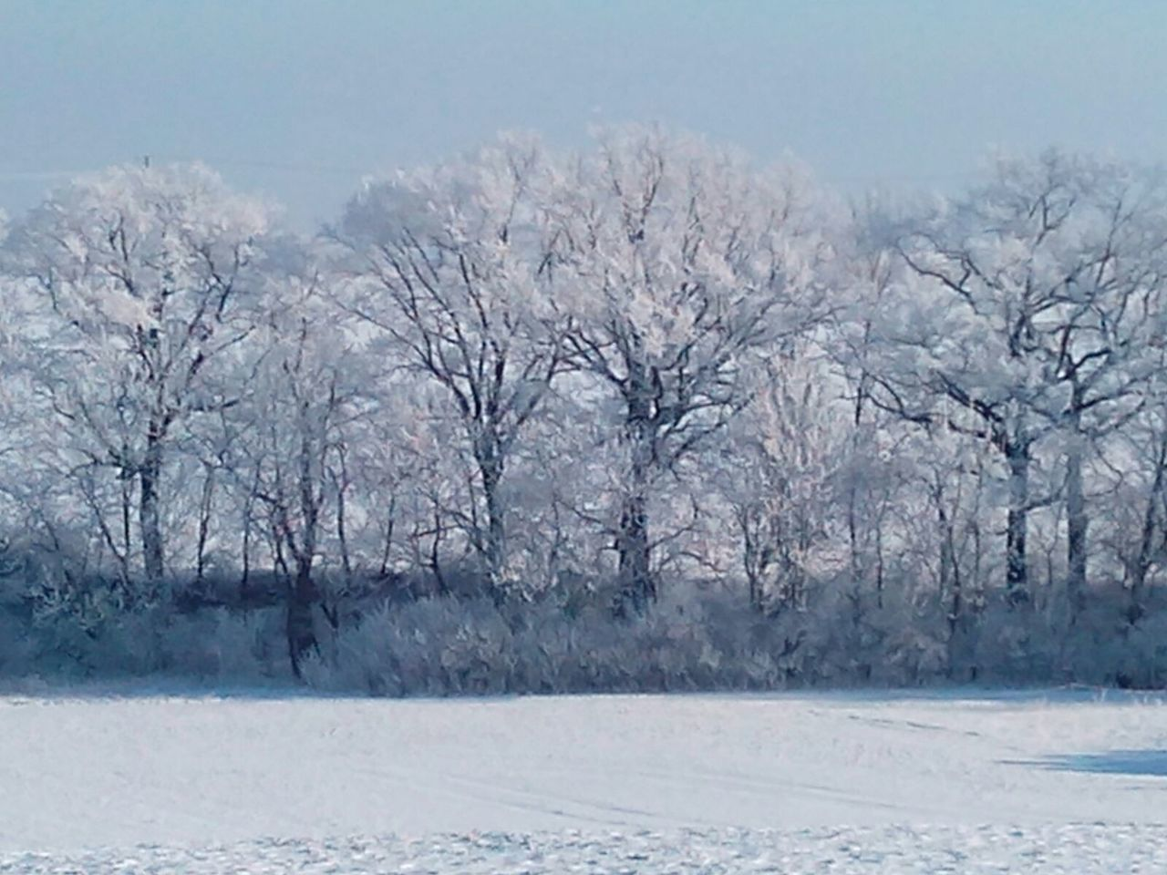 winter, cold temperature, snow, cold, nature, bare tree, beauty in nature, tree, tranquility, weather, landscape, no people, frozen, tranquil scene, day, outdoors, frost, scenics, branch, sky