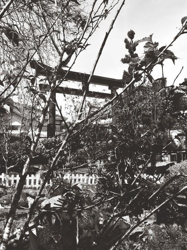 Jardim Japonês Blackandwhite Capa Filter