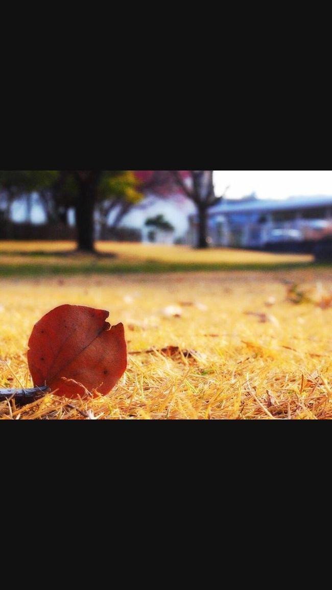 Morning Good Morning Sunrise Flower Hello World Paper Tree Nature Whit My Love <3 Enjoying Life Relaxing