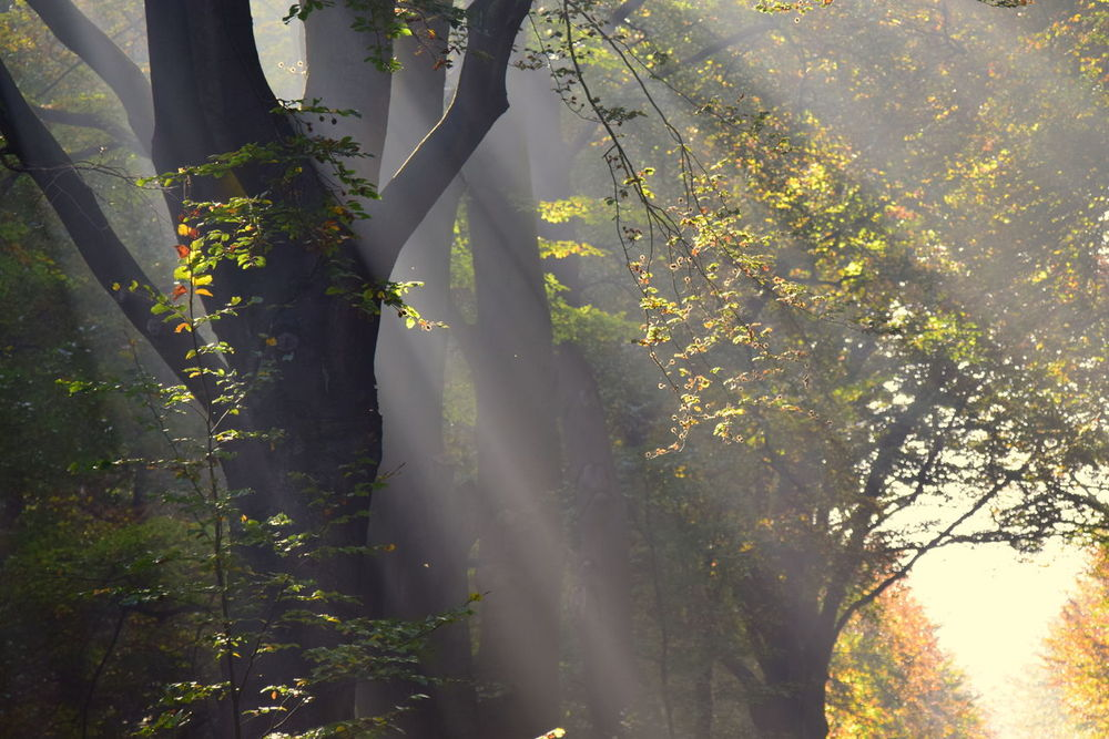 Light Beauty In Nature Branch Close-up Day Freshness Autumn Colors Leaf Light And Reflection Nature No People Outdoors Plant Sunbeam Autumn Light Tree Water
