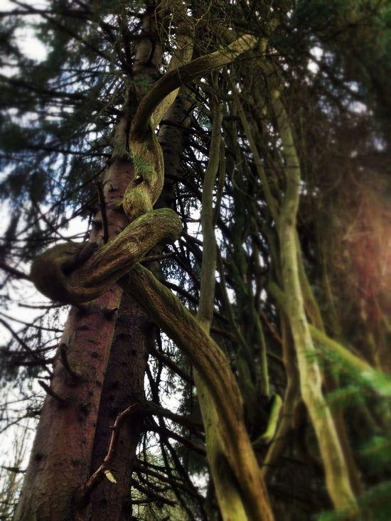 Nature's Tango