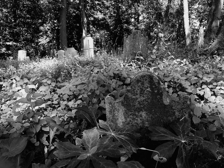 Graveyard Beauty Graveyard Beauty Of Decay Cemetery Cemeterybeauty Explore Your Outdoors Blackandwhite Black And White