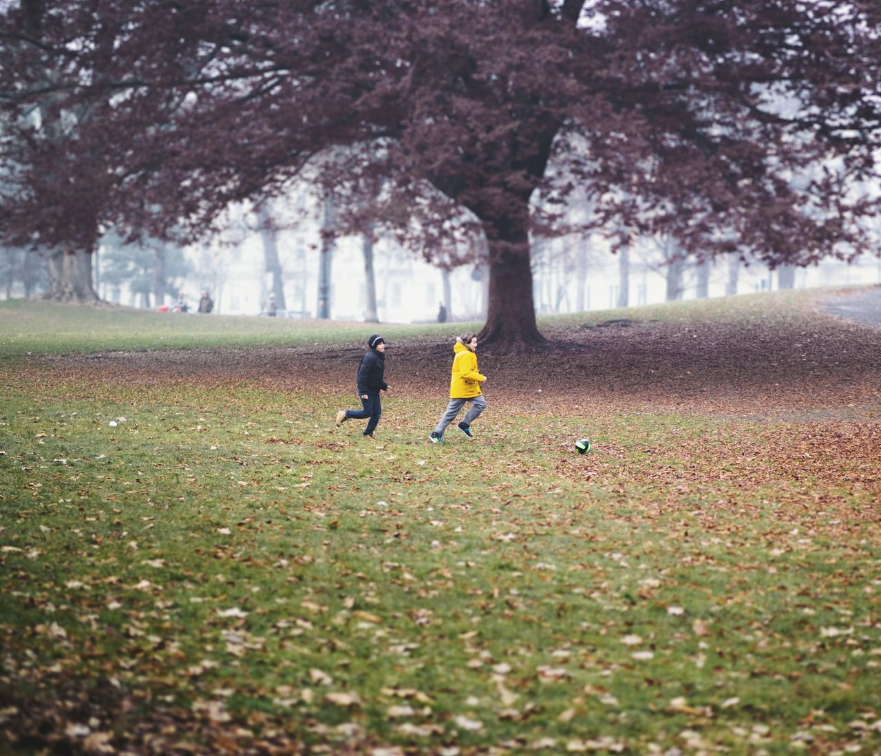 Soccer Tree Growth Sport Play Football Fun Run Soccer Player Outdoors Competition Nature Sports Training Day Men People One Person Sportsman Child Torino Park Leaves Urban Exploration Autumn