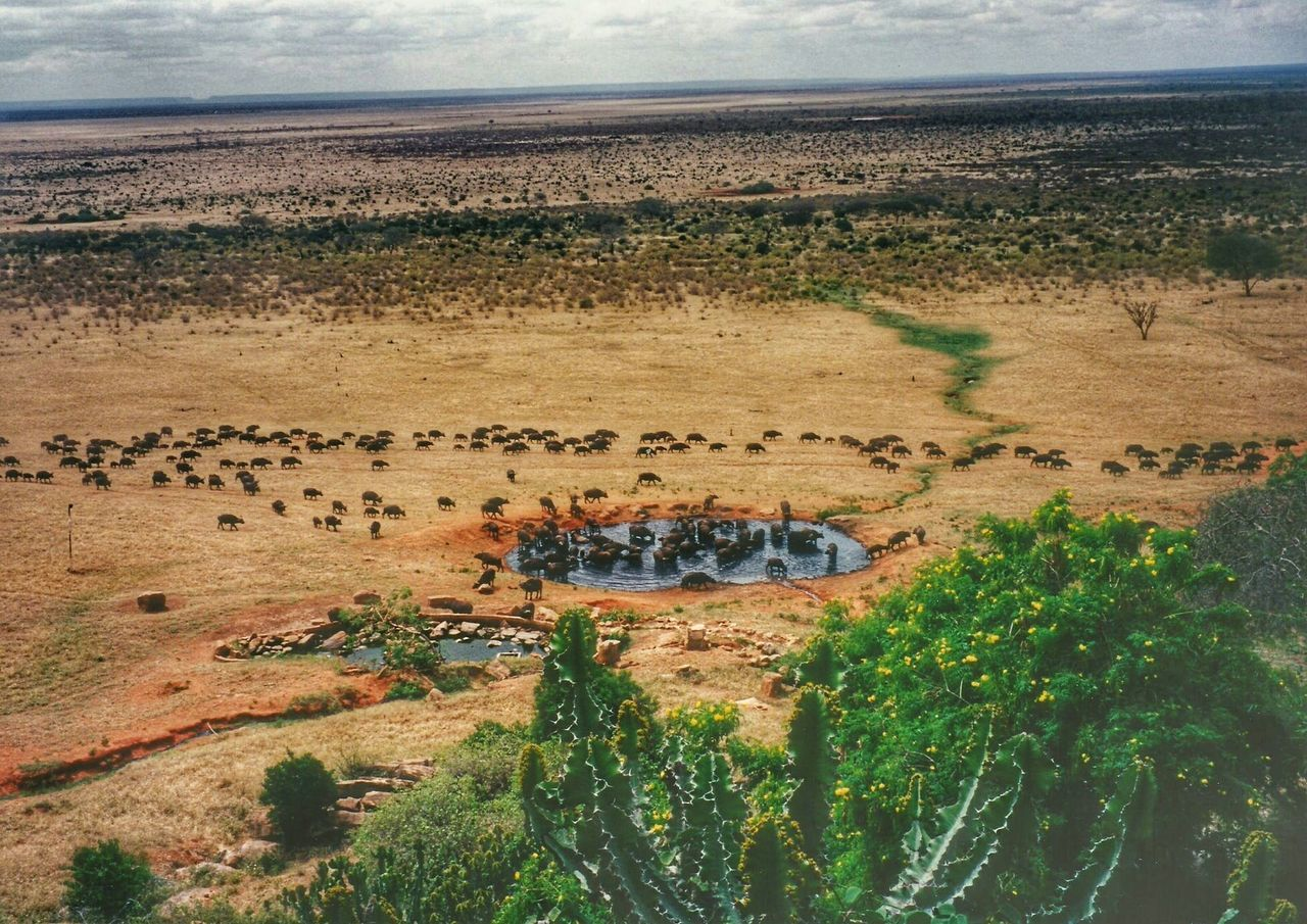 Maasai Mara Wildlife Photography Africa Kenya Safari Original ExperiencesWatering Hole Landscape_photography Water Buffalo Scenery Shots Going The Distance Animal Photography Wanderlust Wildlife & Nature Nature Photography Landscape Landscapes Photography In Motion Landscape_photography Wilderness In The Wild Landschaft Feel The Journey Tsavo Landscapes With WhiteWall
