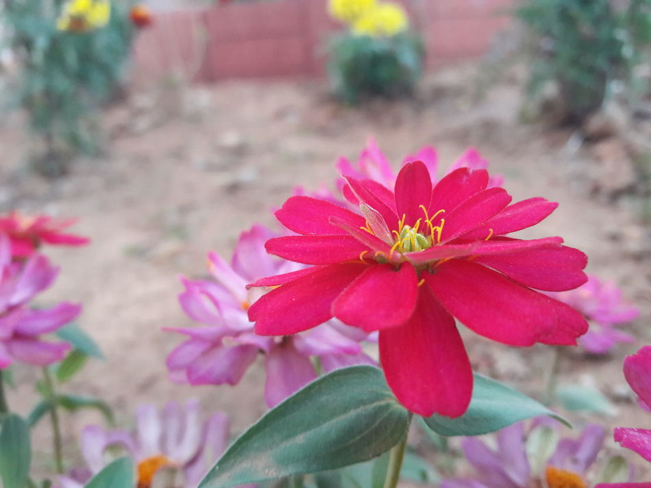 CLick BY ME Nature Photography Jamshedpur Bhubaneswar