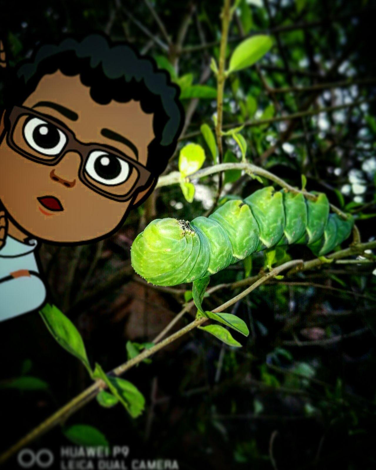 Insect Nature Pura Vida ✌ Costa Rica Costaricacool Costaricanatural Nature