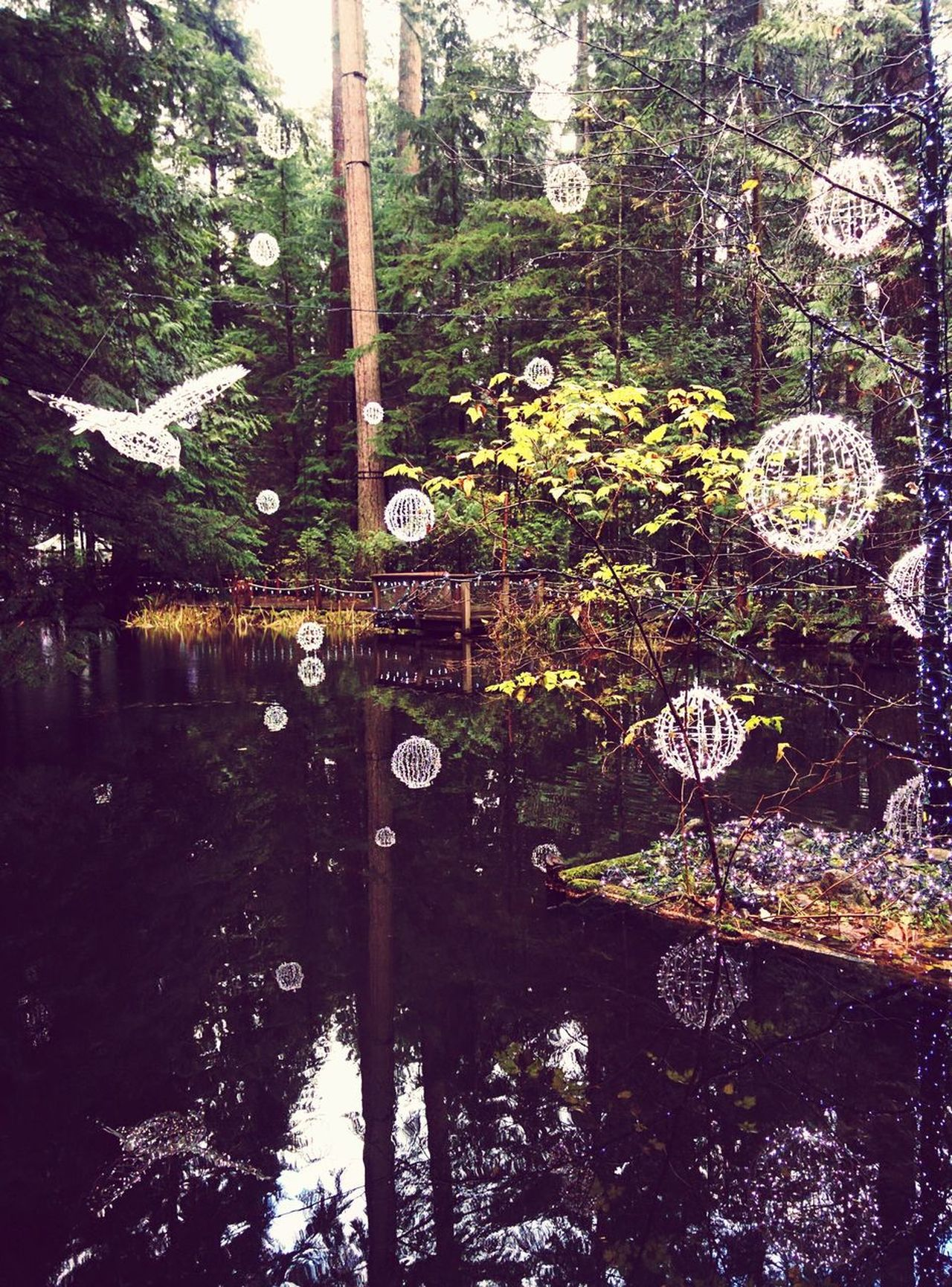 Tree Reflection Full Frame No People Day Outdoors Nature Water Backgrounds Beauty In Nature Capilano Suspension Bridge Christmas Lights Reflctions Clear EyeEmNewHere