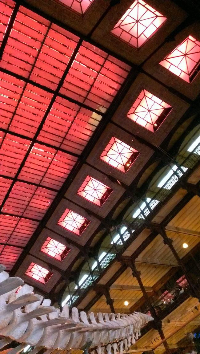 Architecture Colors Bones Grande Galerie De L évolution