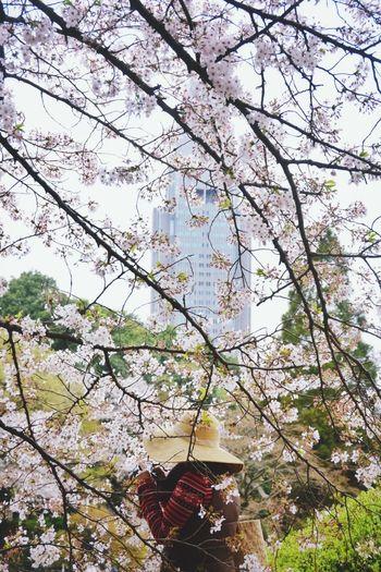 Docomo tower on the back from Shinjuku Gyoen. EyeEm Tokyo Meetup 8 Flowers Spring EyeEm Nature Lover EyeEm Best Shots People Taking Photos Looking To The Other Side Secret Garden The Traveler - 2015 EyeEm Awards Urban Spring Fever
