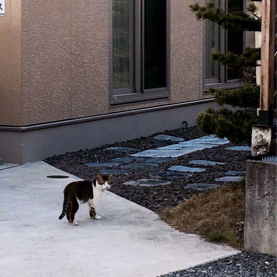 おとなりのニャンコ。撫でたくて近づいたら逃げられた(~_~;) おとなり ねこ Cat