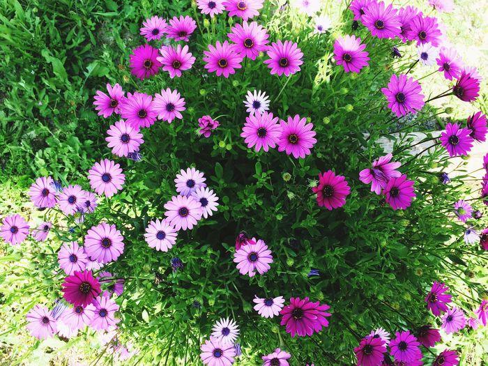 Nature Flowers,Plants & Garden EyeEm Nature Lover Flowers Primavera Spring Into Spring