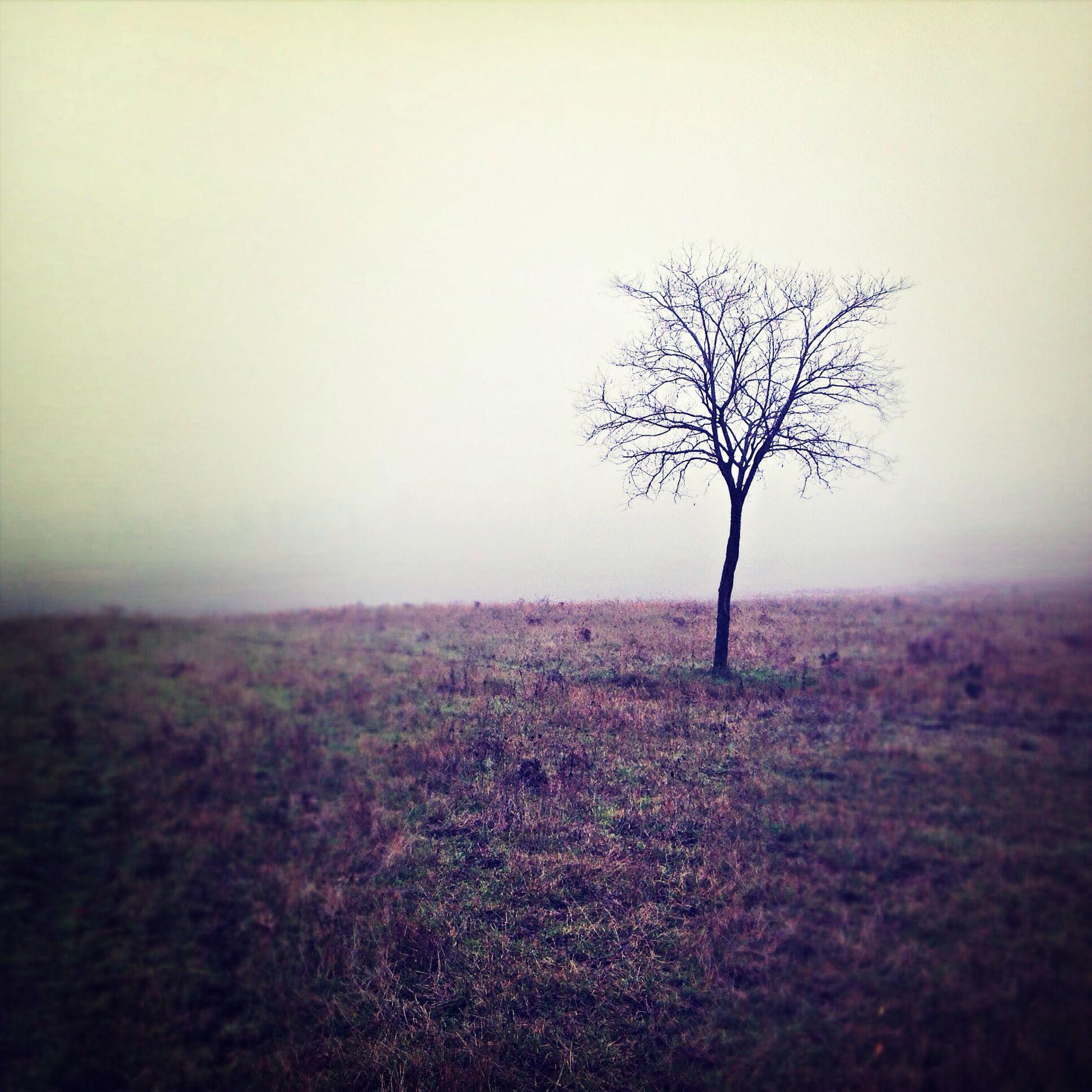 Tree Autumn Beutiful