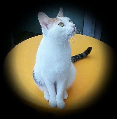 One Animal Pets Domestic Animals Domestic Cat Cat Sitting Feline Yellow Animal First Eyeem Photo