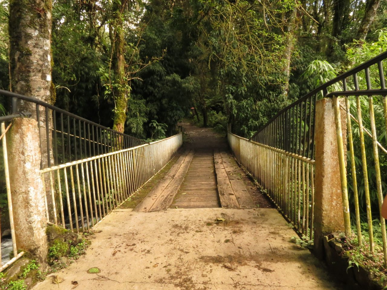 railing, bridge - man made structure, connection, tree, the way forward, footbridge, outdoors, nature, day, bridge, no people, forest