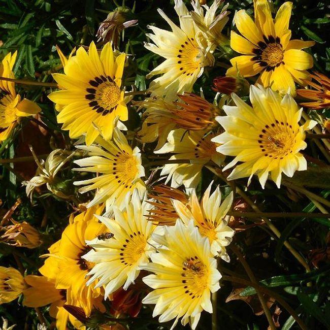 My click Beautiful Flowers Travel Lovelynatureshots Quinta Vasocam Ig_india Ig_today MyPhotography