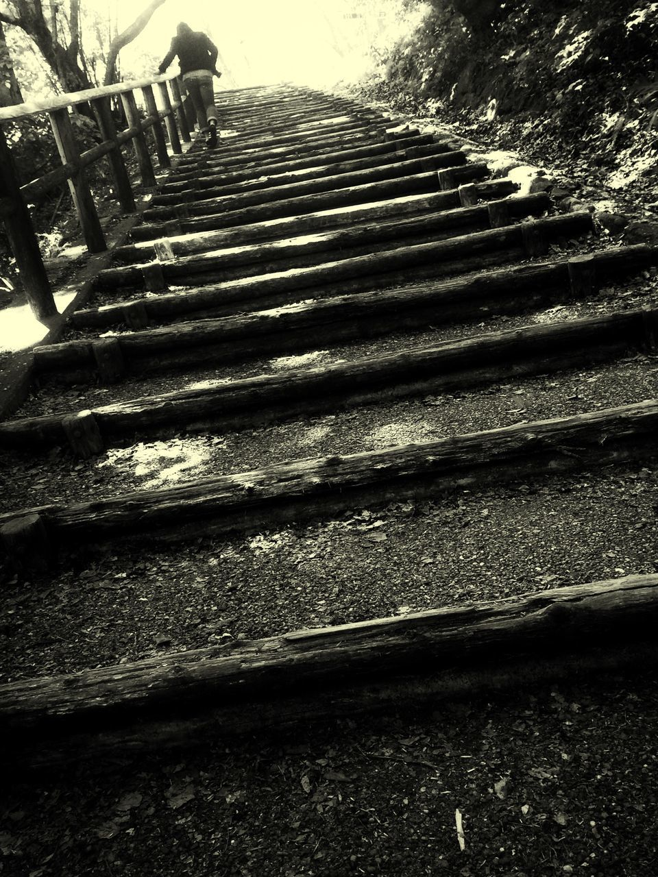 steps, steps and staircases, staircase, stairs, shadow, day, outdoors, no people, hand rail, nature