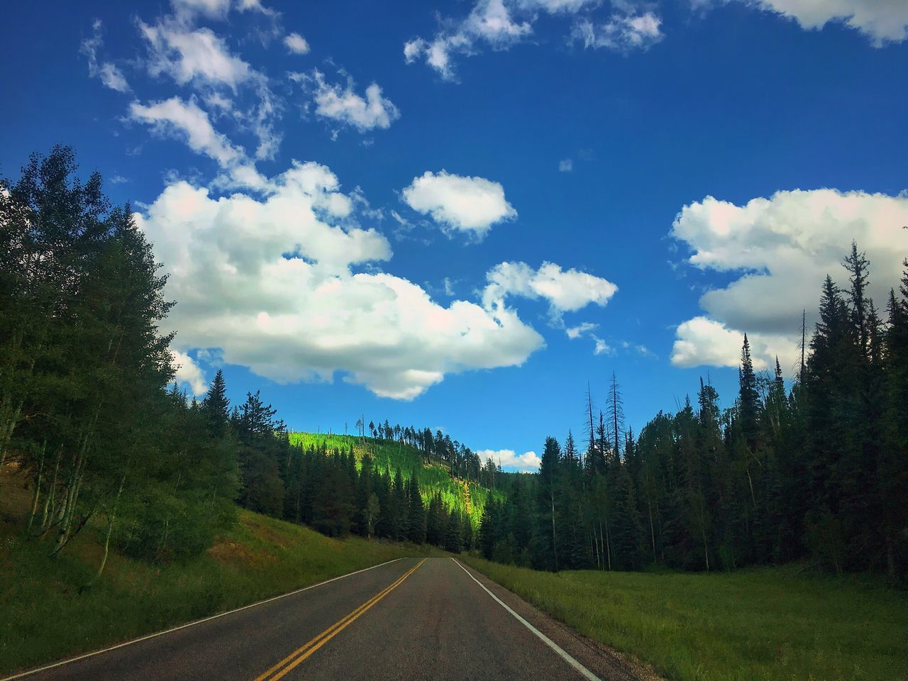 road, tree, the way forward, sky, transportation, cloud - sky, tranquility, nature, no people, tranquil scene, day, scenics, outdoors, landscape, beauty in nature